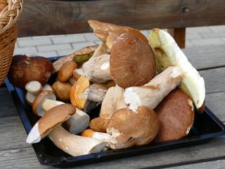 Почему никто не собирает грибы?